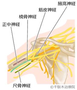 腱鞘炎_神経